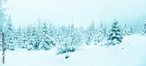 Montage in der Fensternische Licht blau Beautiful winter landscape with fresh snow covered spruce trees