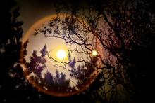 Sun Halo Through Trees