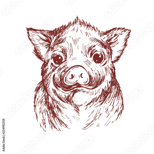 Hand Draw A Portrait Of A Little Pig Vector Sketch Illustration