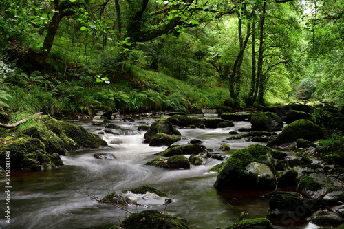 Fototapety, obrazy: Long exposure of the river flowing through the woods at Watersmeet in Devon