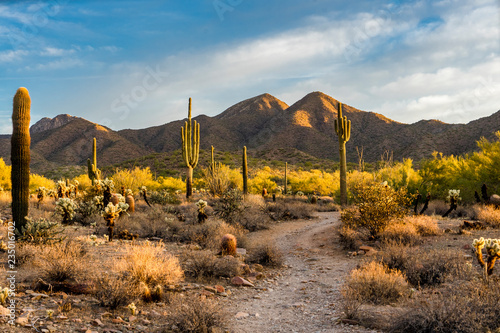 Morning light in the Sonoran desert in Scottsdale, Arizona Canvas Print