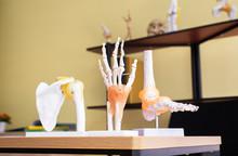 Hands Plastic Anatomy Physiology Model A Bones In Hospital