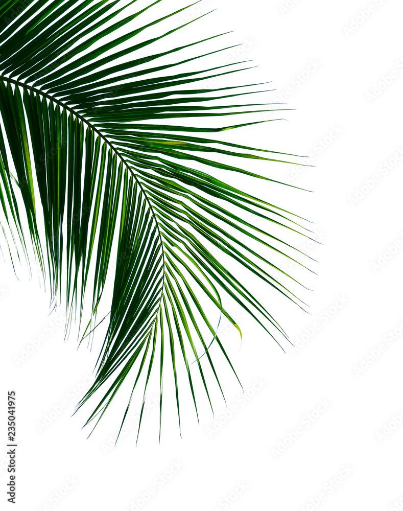 Fototapeta tropical coconut palm leaf isolated on white background