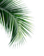 canvas print picture - tropical coconut palm leaf isolated on white background