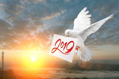 Foto En Lienzo - White Dove carrying 2019 Text in dry brush free hand Style on White paper in Sunset and Happy New Year 2019 Concept