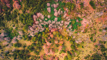 Autumn Forest Aerial