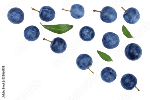 Fotografie, Tablou  The fruits of blackthorns isolated on white, top view