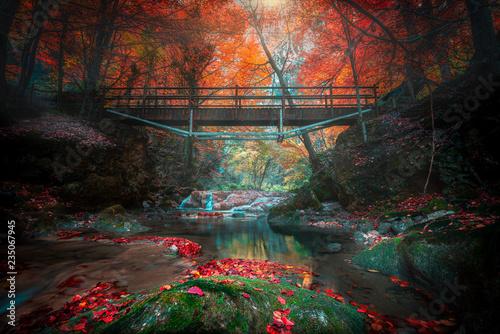 Fotografia, Obraz  bosque y bosques encontrados, hacedero del rio urederra, del país vasco para tur
