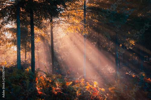 Fotografia, Obraz  bosque y bosques encontrados del país vasco para turistas