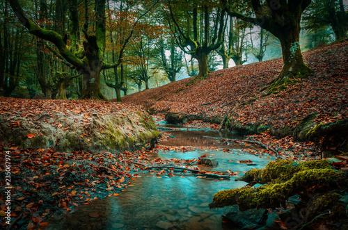 znalezione-lasy-i-lasy-wykorzystanie-rzeki-urederra-i-otzarreta-kraju-baskow-dla-turystow