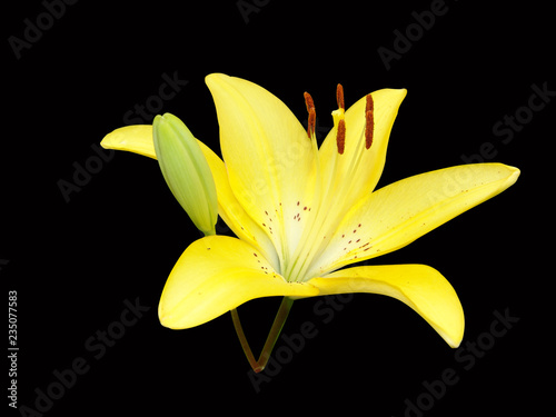 black, background, lily, yellow, flower, bouquet, beautiful