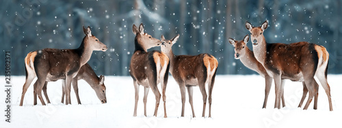 Group of beautiful female graceful deer in a snowy winter forest Canvas Print