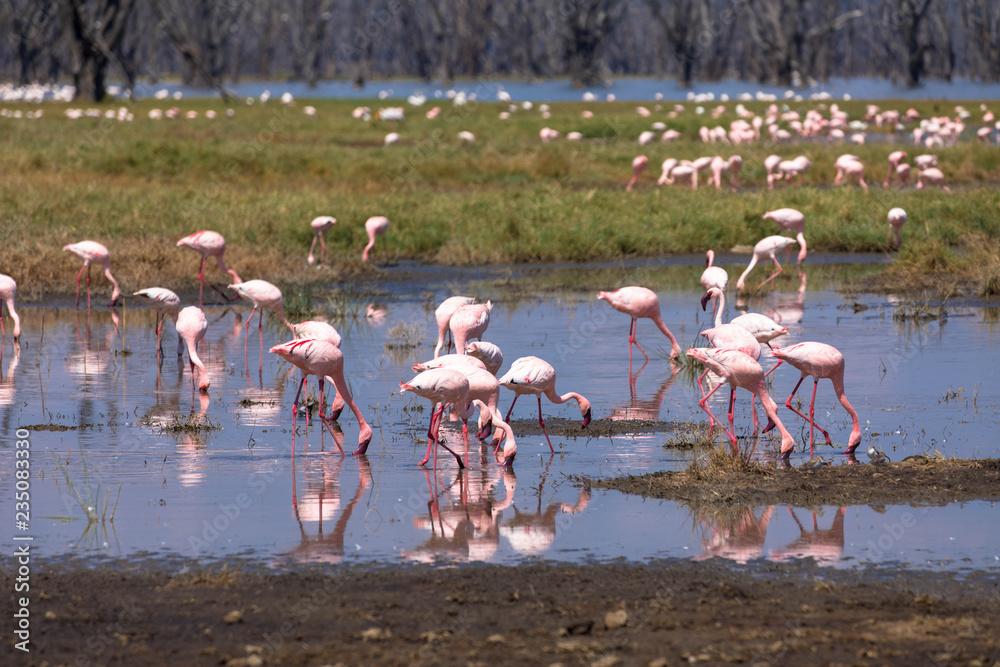 Flamingos - Lake Nakuru Nationalpark