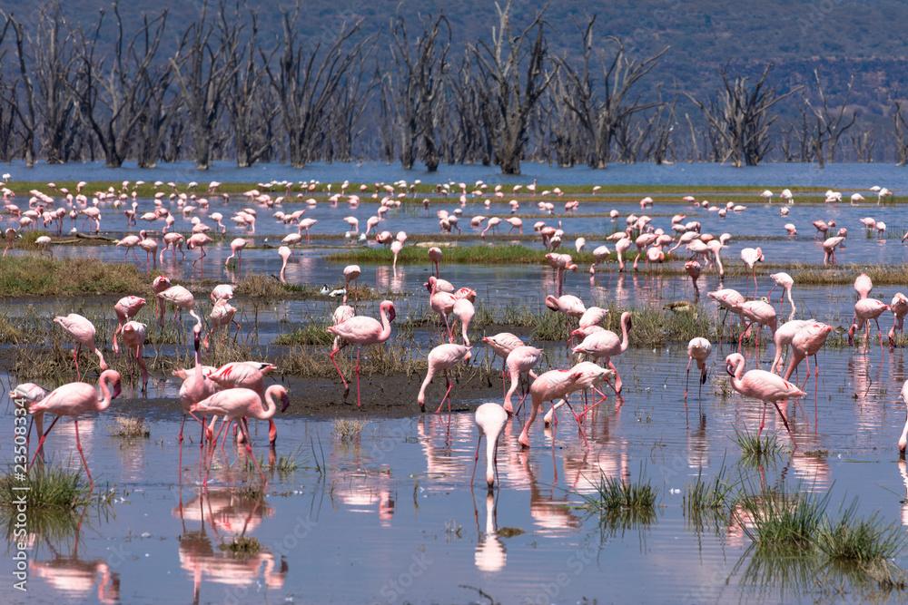 Lake Nakuru Nationalpark: Flamingos