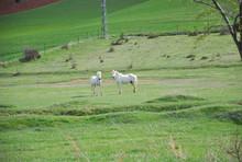 Caballos Sueltos En El Prado