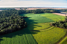 Soybean Fields On Atlantic Rainforest