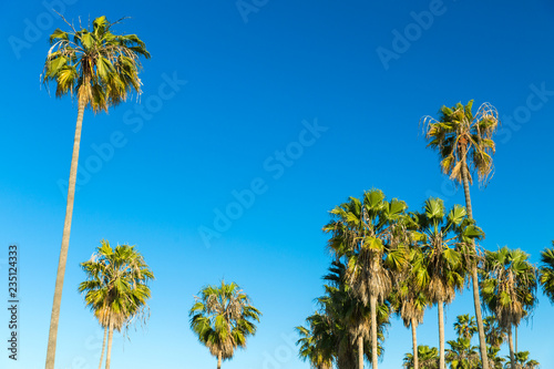 In de dag Los Angeles nature and summer holidays concept - palm trees over blue sky at venice beach, california