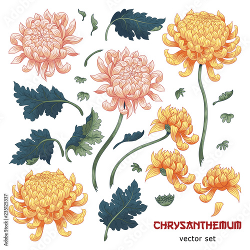 Vászonkép Set of elements of chrysanthemum flower to create designs