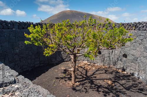 Tuinposter Canarische Eilanden canary islands lanzarote agriculture scene