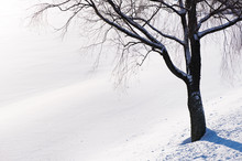 Winter Scenery With Tree In Sn...