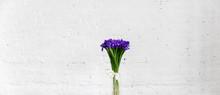 Bouquet Of Flowers Iris On White Brick