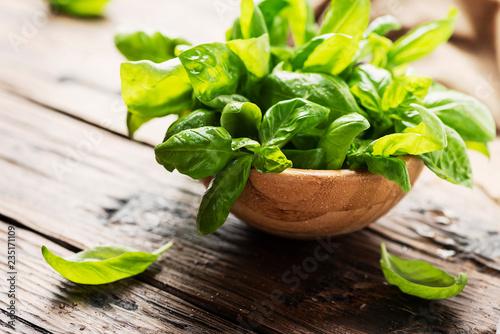 Fotografia Green fresh basil