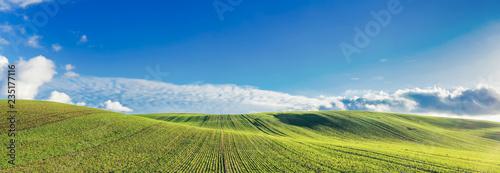 Obraz Green field and blue sky with clouds. - fototapety do salonu