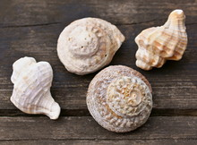 Dekorative Muscheln Auf Einem Holzbalken