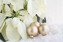 Christmas Photograph Of White Poinsettia On White With Gold Christmas Balls And Ribbon