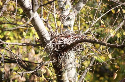 Vászonkép convolute nest on tree
