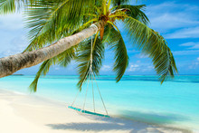 Wooden Swing On A Rope On A Palm Tree