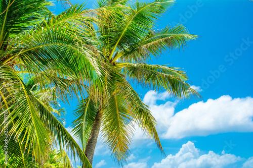 Spoed Foto op Canvas Natuur Tropical palm tree