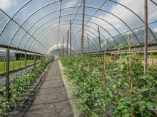 Interior Of A Hoop House Fille...