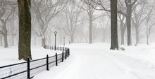 Central Park During Middle Of ...