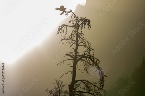 Photo  Bald Eagle Lands on tree with mountains in the background