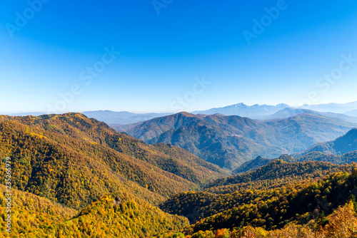 Poster Crimson Scenic landscape with trees in mountain forest in autumn