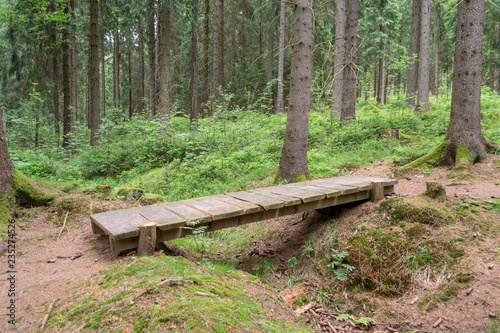 Fotografía  wooden bridge in the forest