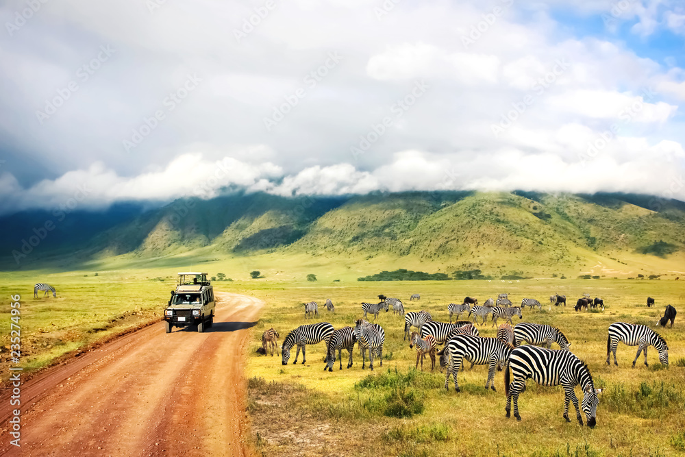 Fototapeta Wild nature of Africa. Zebras against mountains and clouds.  Safari in Ngorongoro Crater National park. Tanzania.