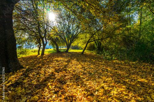 Foto op Canvas Herfst Herbstfarben im Gegenlicht