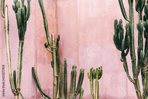 Plants on pink concept Fototapeta