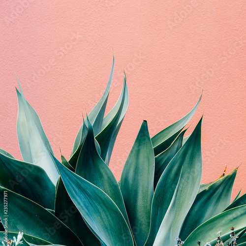 Plants on pink fashion concept. Green on pink wall background. Minimal plant design