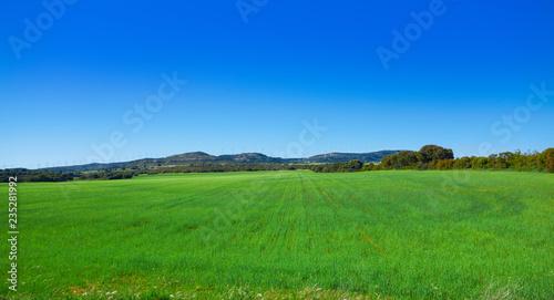 Deurstickers Groene Spring meadow Camino de Santiago