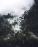 Fototapeta Na sufit - Mgła