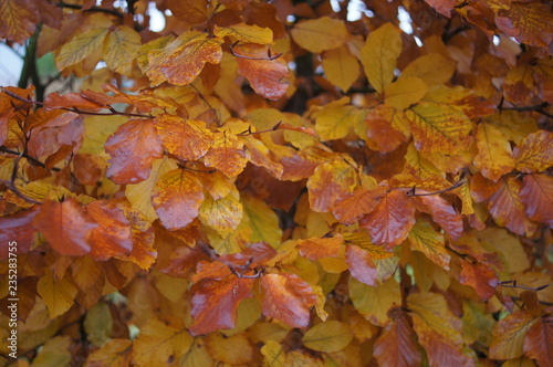 Photographie autumn,autumn, leaf, leaves, food, fall, nature, maple, pizza, season, yellow, m