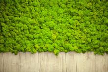 Green Lichen. Moss Wall In Mod...