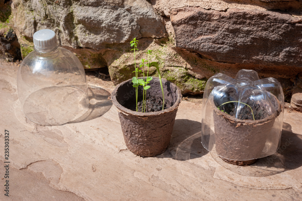 Fototapety, obrazy: Seedlings and recycled plastic bottles
