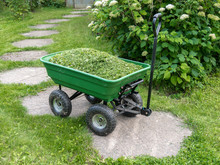 Garden Trolley With Mown Grass On The Path On The Background With A Blooming Hydrangea. Summer Work In A Garden: Mow The Grass Along The Stone Walkway.