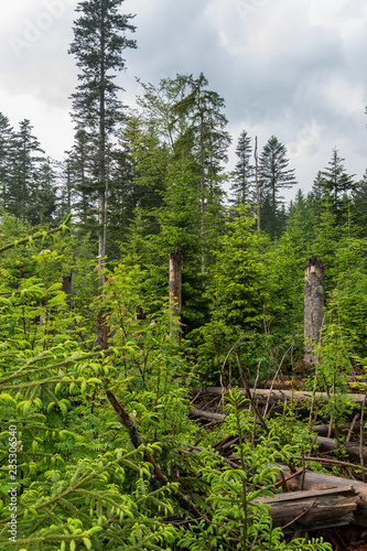 Fotografie, Obraz  Bayrischer Wald