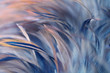 Leinwandbild Motiv Blur Bird chickens feather texture for background, Fantasy, Abstract, soft color of art design.