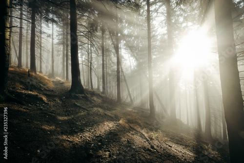 Foto op Aluminium Begraafplaats Herbst nebel sonnne stimmung